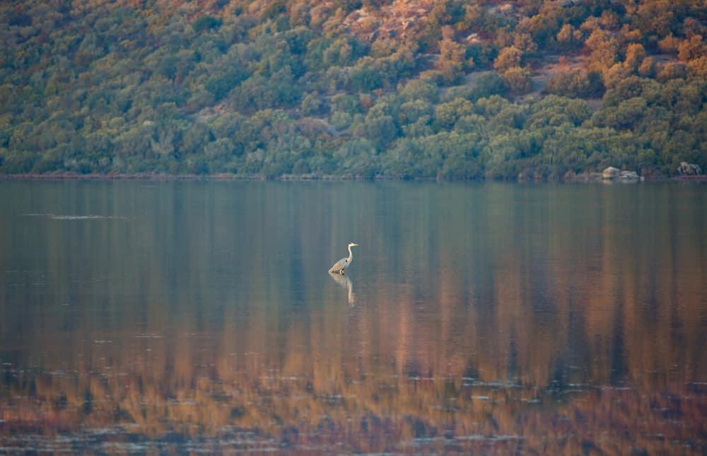Bodrum Tuzla Kuş Cenneti