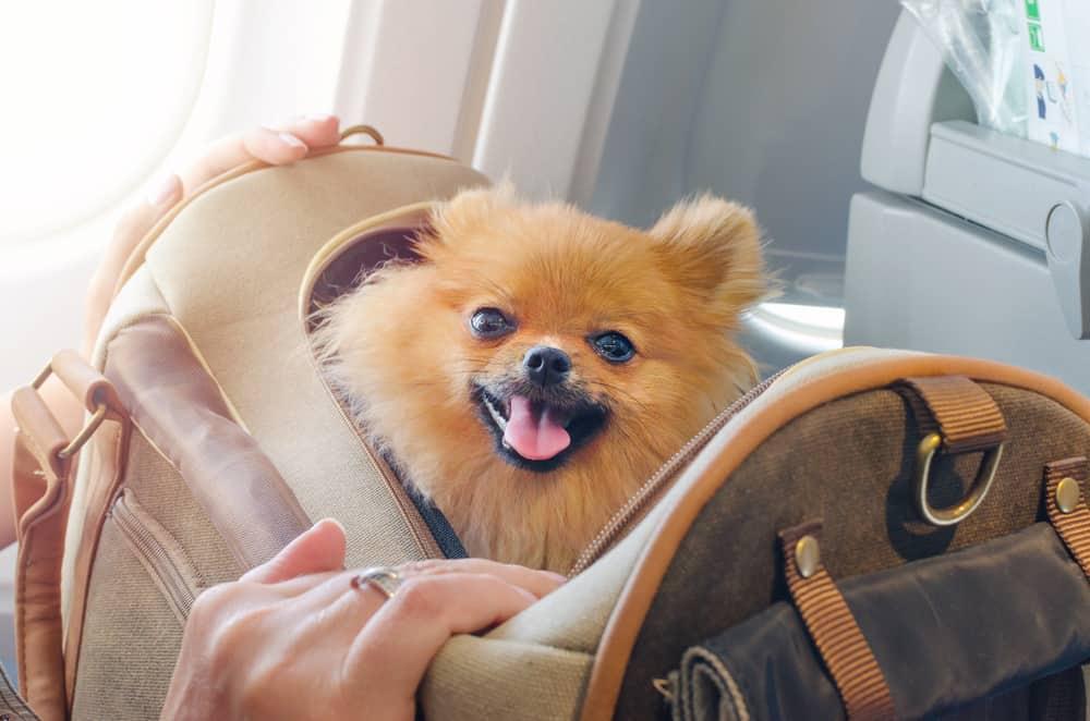 Uçakta Köpek Taşıma