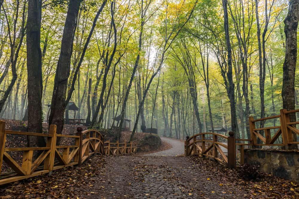 Belgrad Ormanları, İstanbul