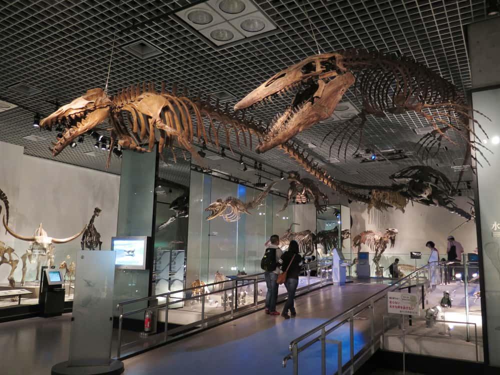 apon Ulusal Doğa ve Bilim Müzesi