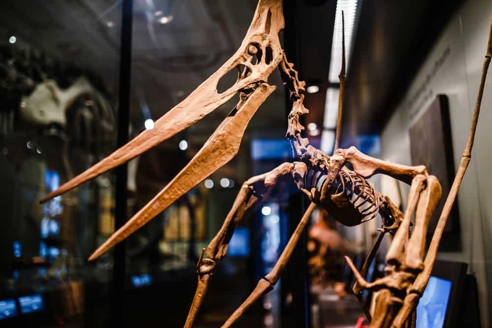 Doğa Tarihi Müzesi