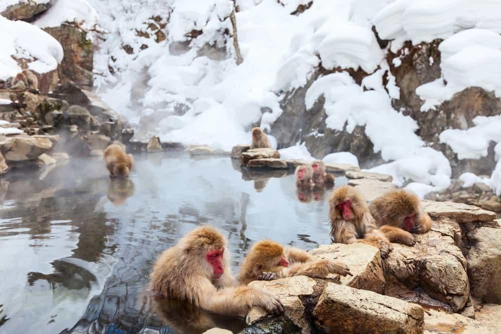 Jigokudani Maymun Parkı