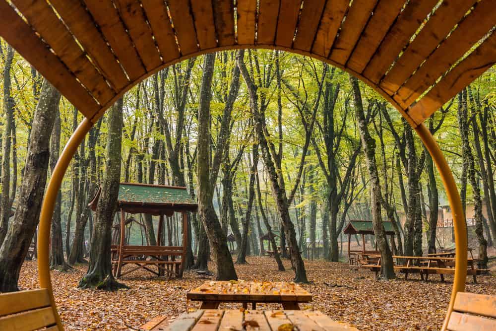 Belgrad Ormanı (2)