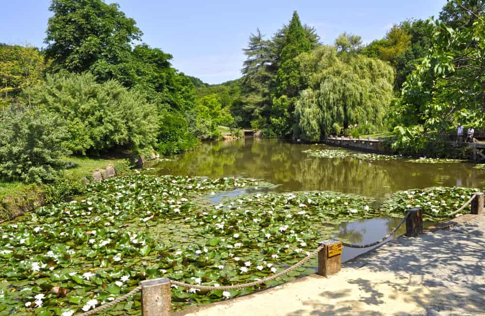 Atatürk Arboretumu Sarıyer