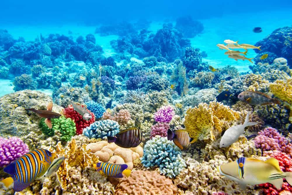 Avustralya Mercan Resifleri