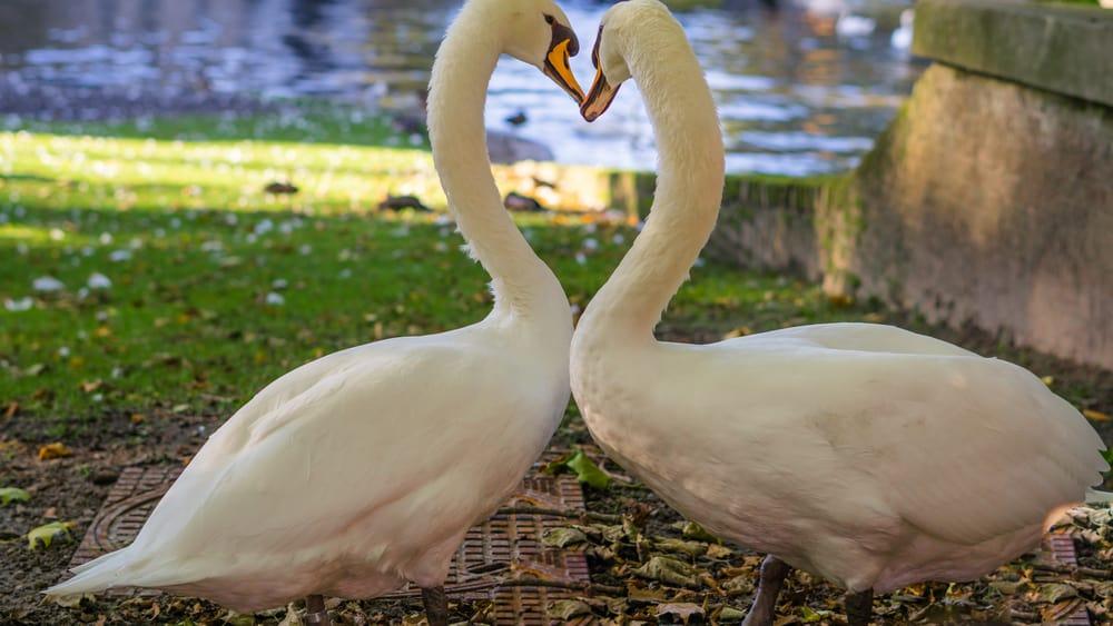 Brugge, Belçika Romantik