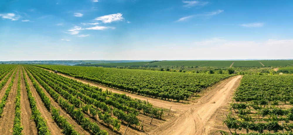 Cricova Şarap Mahzeni Moldova