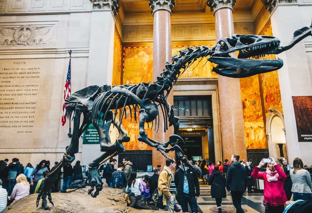 American Museum of Natural History (Amerikan Doğal Tarih Müzesi) New York