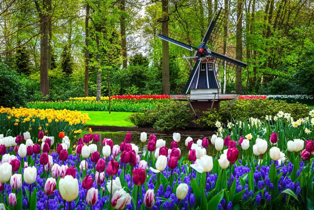 Keukenhof Hollanda