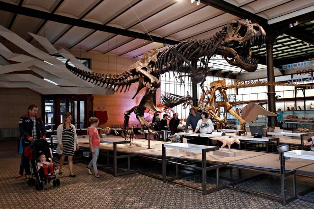 Brüksel Doğa Müzesi