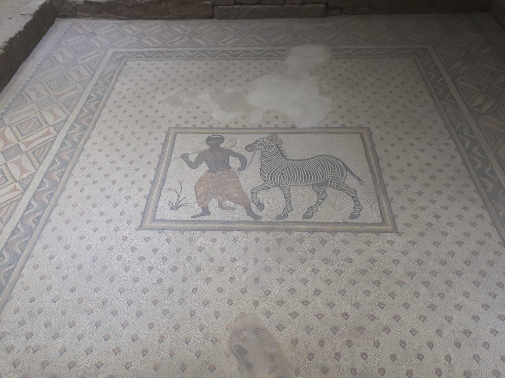 Mozaik Müzesi hizmetkar ve zebra
