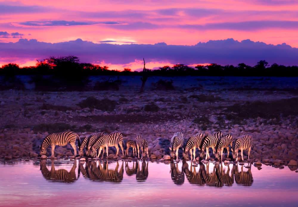 Dijital Detoks Safarisi (Digital Detox Safari), Afrika