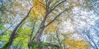 Longoz Ormanları, Kırklareli