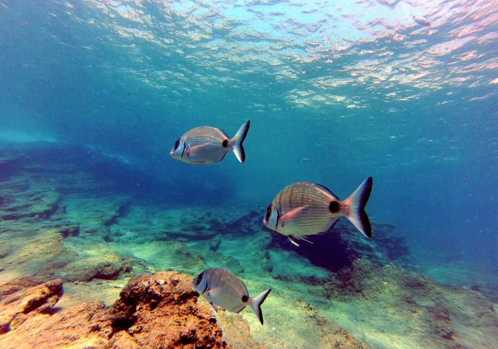 Bodrum Resif