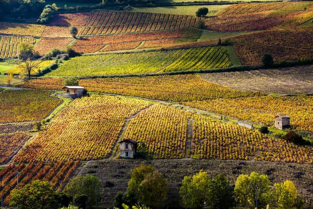 Beaujolais Şarap Bağları, Lyon, Fransa