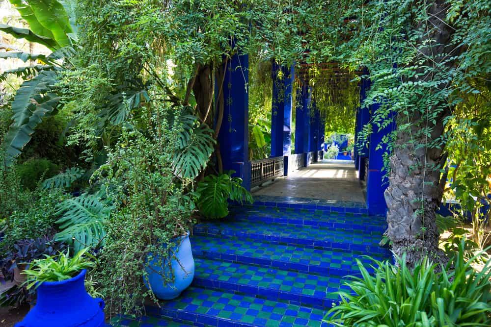 Marakeş Bahçeleri. Majorelle Bahçesi