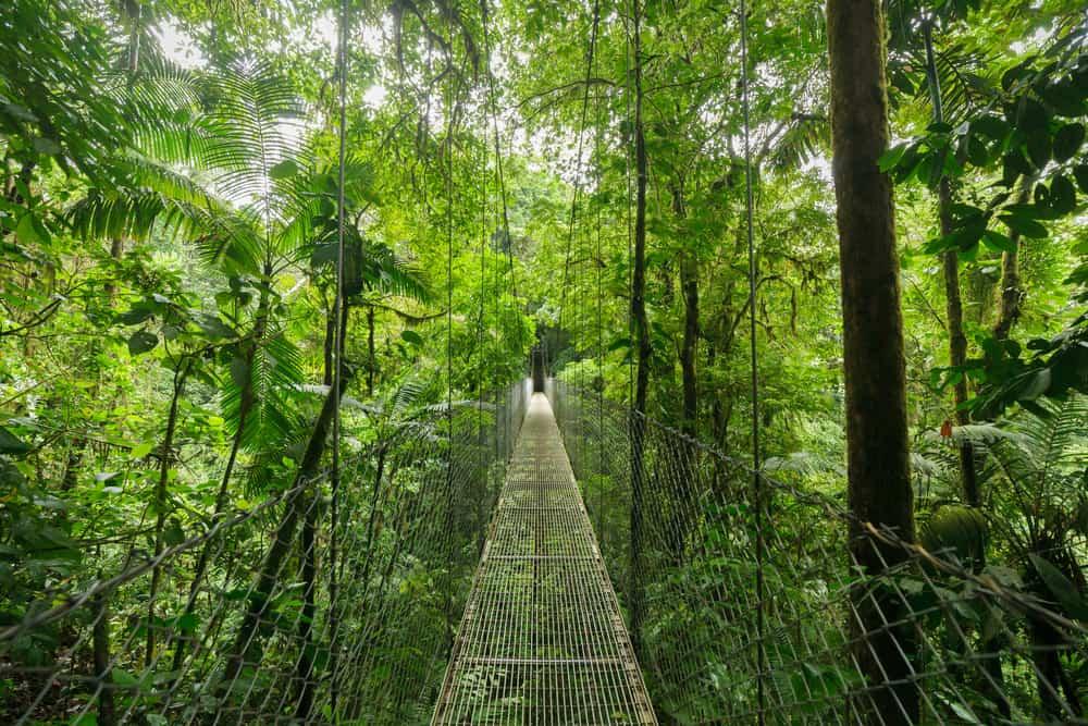 Bulut Ormanı, Kosta Rika