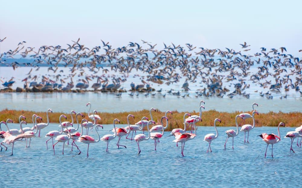 Manyas Kuş Gölü Balıkesir