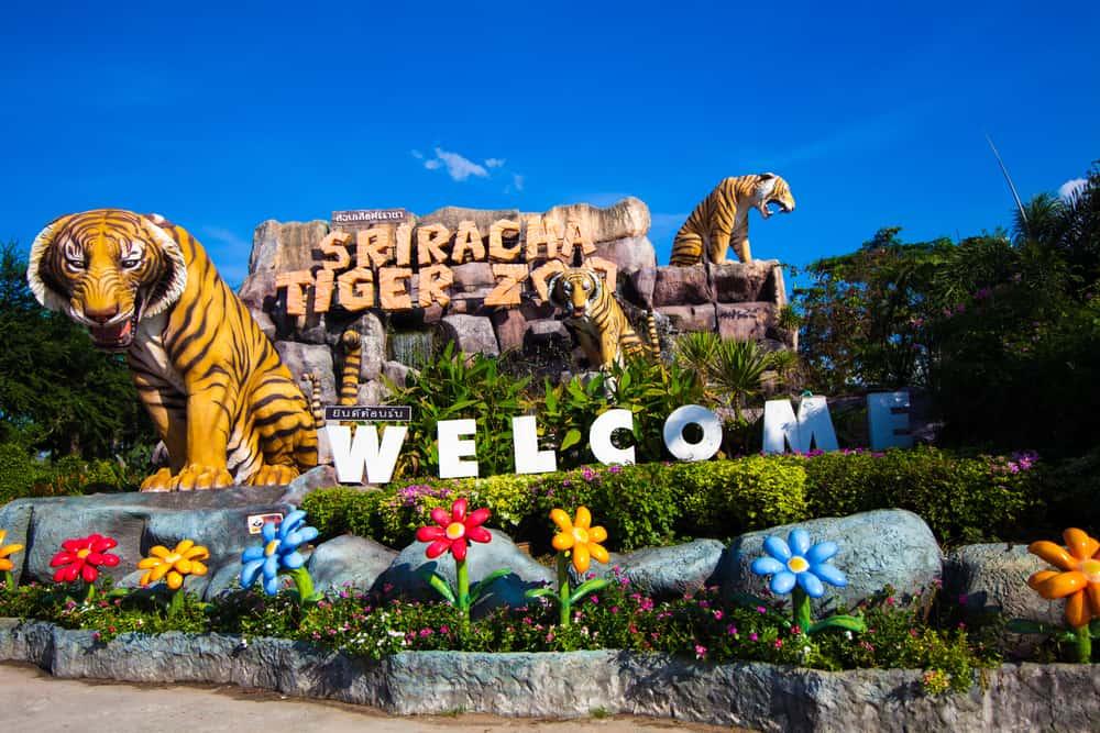 SriRacha Tiger Hayvanat Bahçesi Pattaya