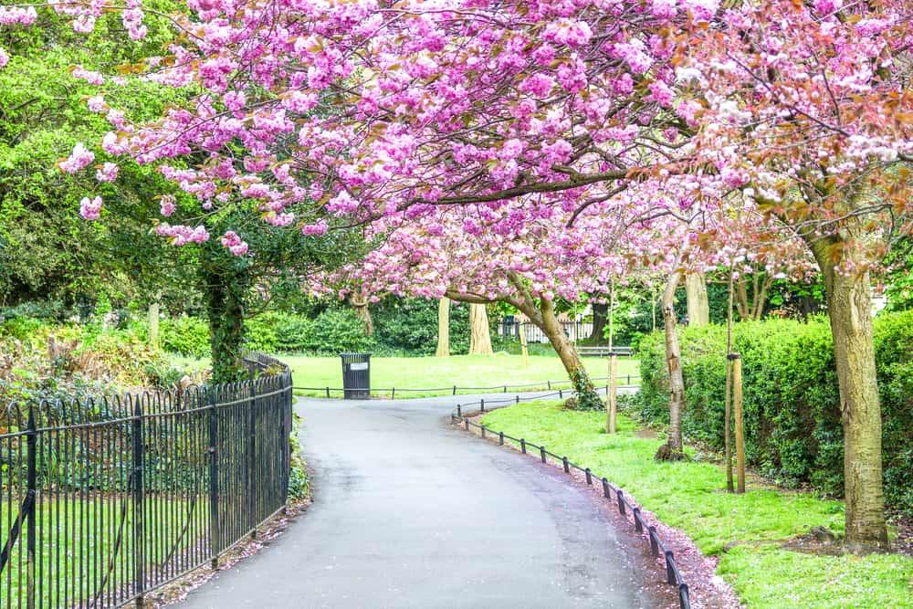 St.Stephen Parkı Dublin