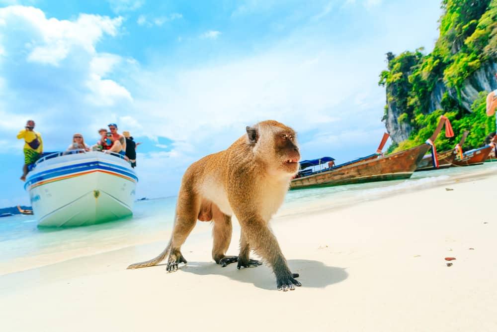 Maymun Adası Tayland