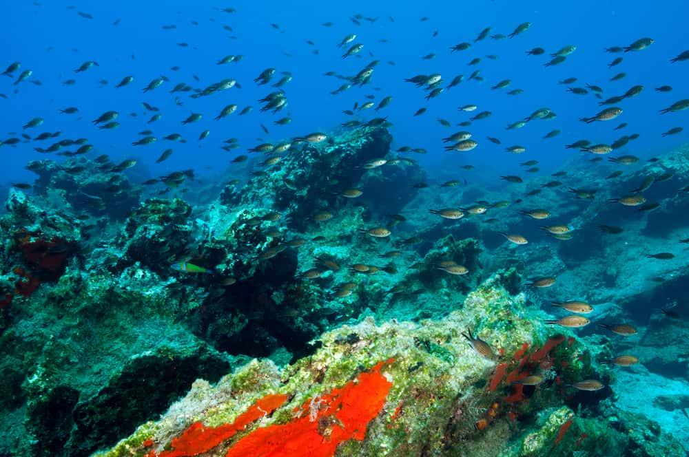Orak Adası Bodrum