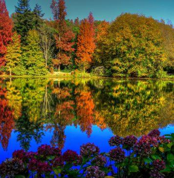 İstanbul Atatürk Arboretum