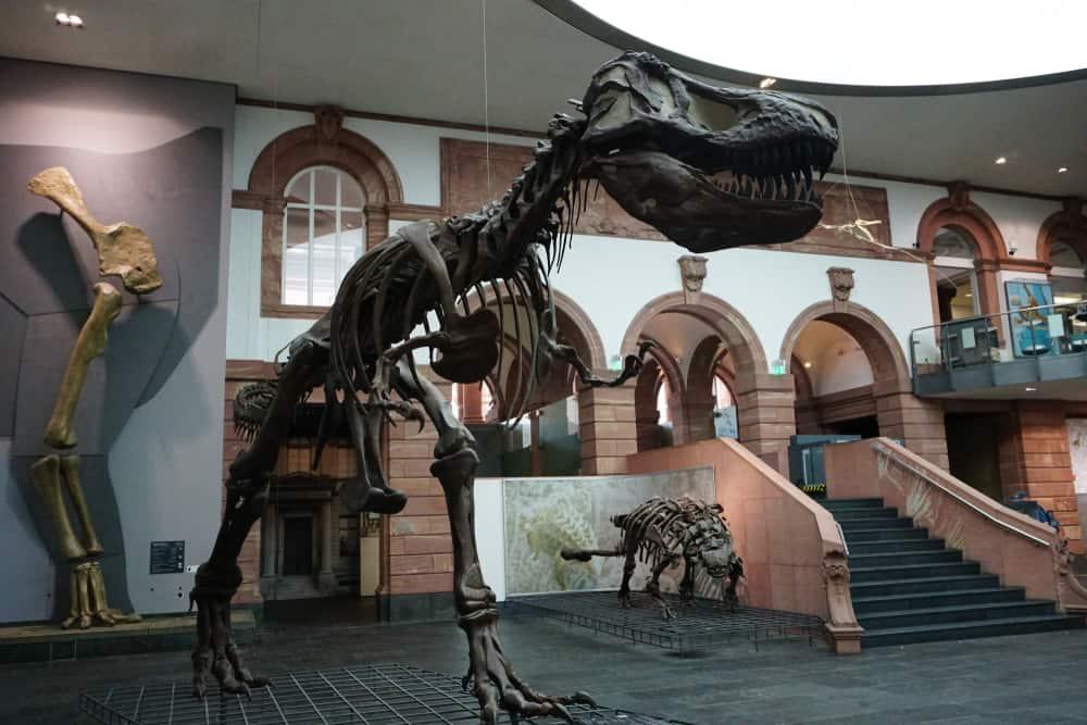 Frankfurt Doğa Tarihi Müzesi