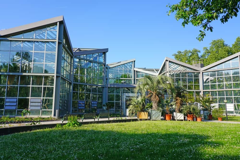 Frankfurt Palmiye Bahçesi