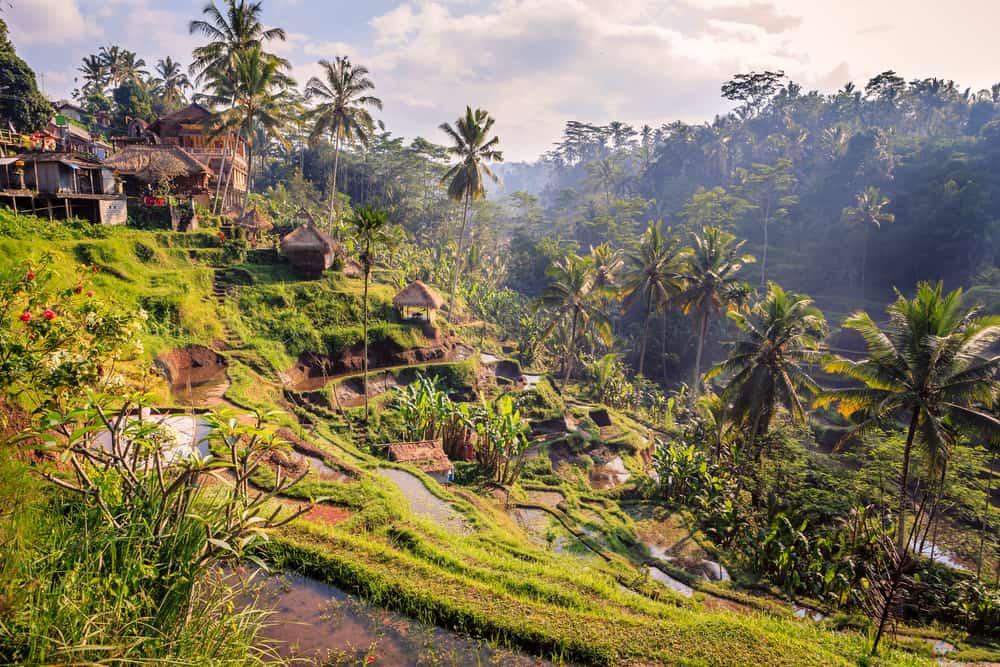 Tegalalang Pirinç Terasları Bali