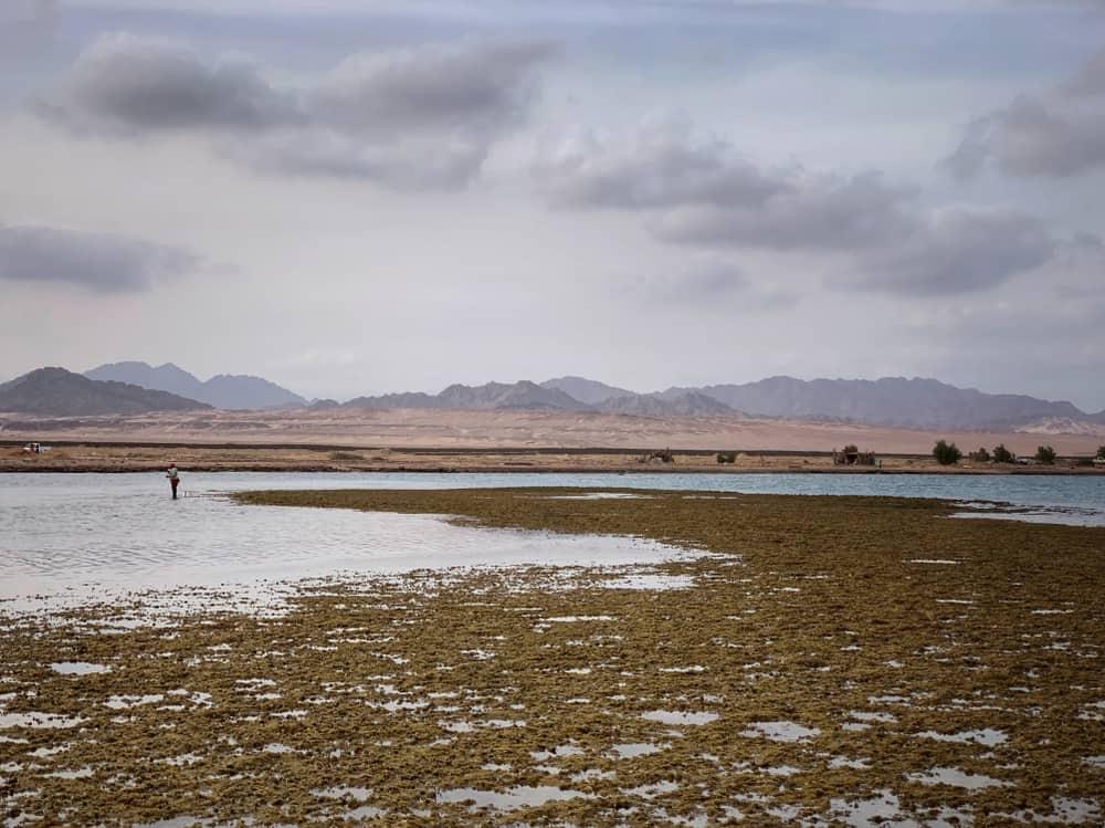 Şarm El Şeyh Nabq Doğa Koruma Alanı