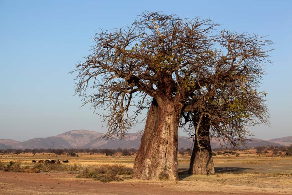 Dodoma Tanzanya