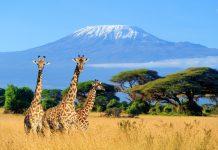 Kenya Büyük Göç