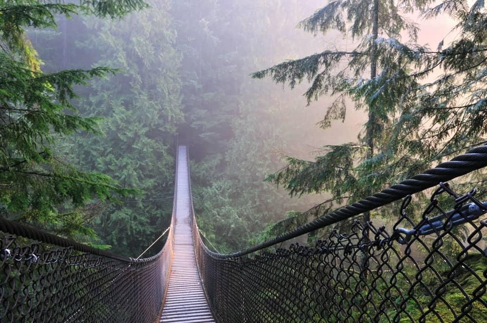 Lynn Kanyon Asma Köprüsü Vancouver Kanada