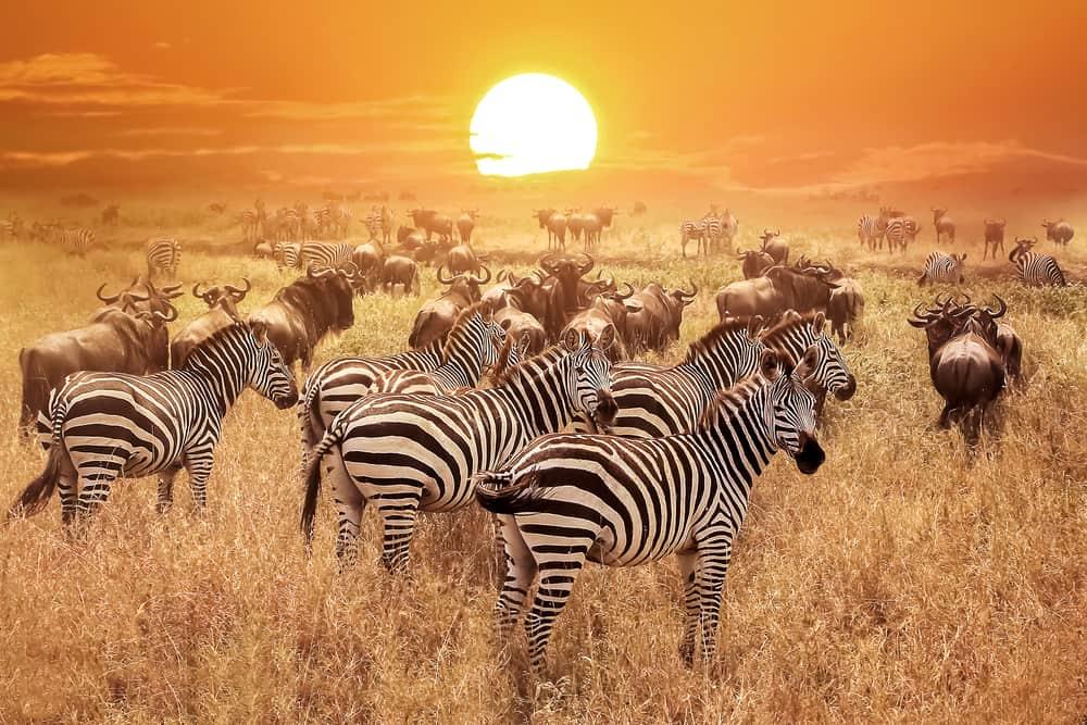 Serengeti Tanzanya