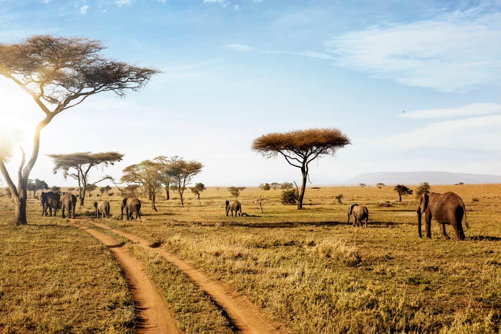 Tanzanya Serengeti