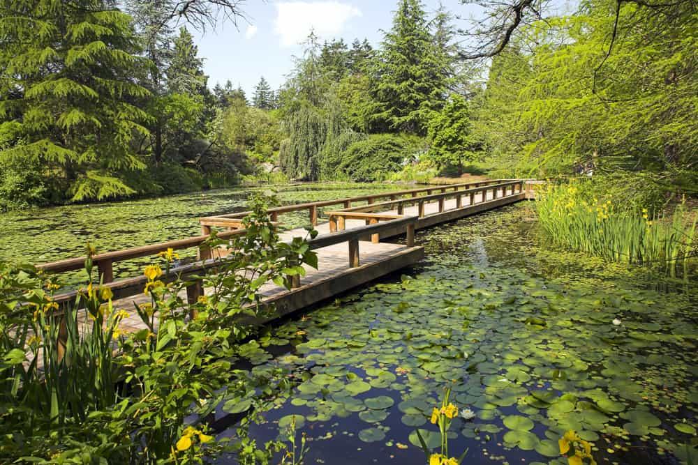 Vancouver VanDusen Botanik Bahçesi