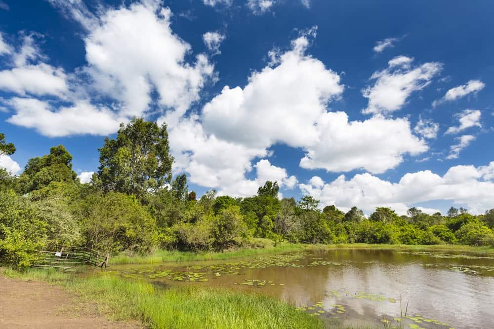 Karura Ormanı Naiorobi Kenya