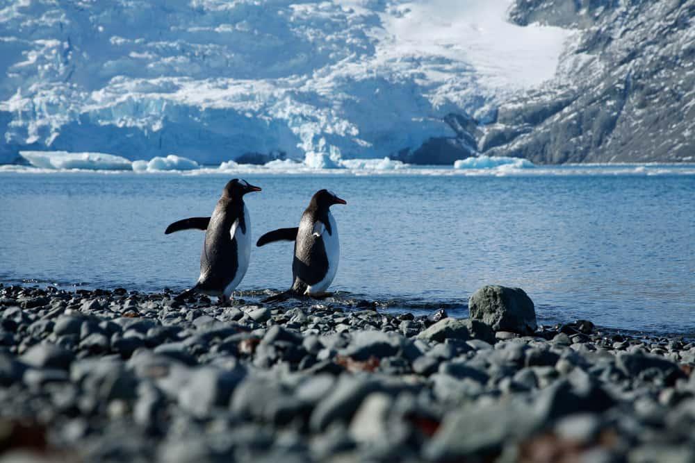 Antarktika Kıtası Penguenler
