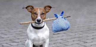 Köpek Yolculuk