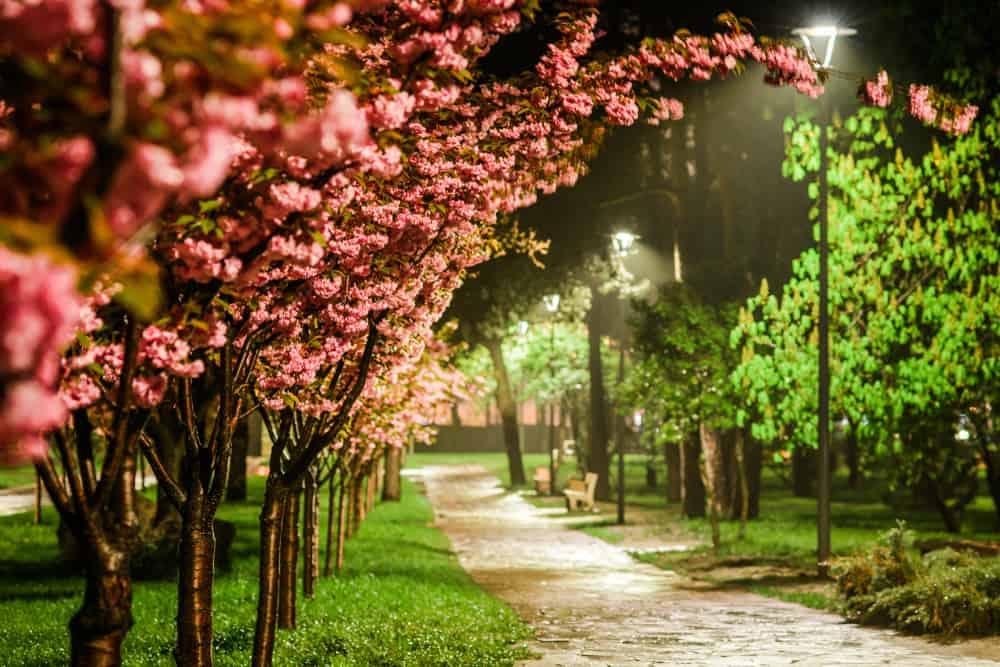 Kioto Parkı, Kiev