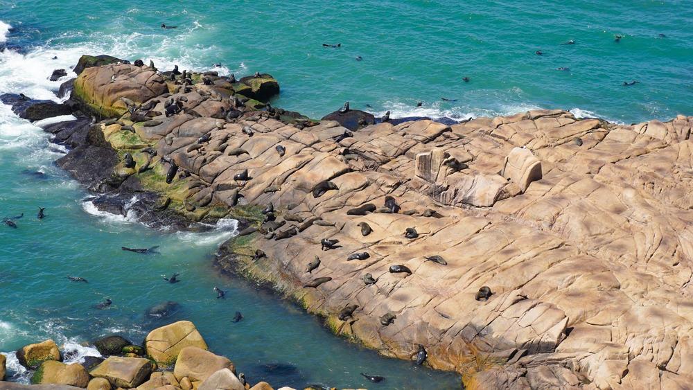 Cabo Polonio Uruguay Deniz Aslanı