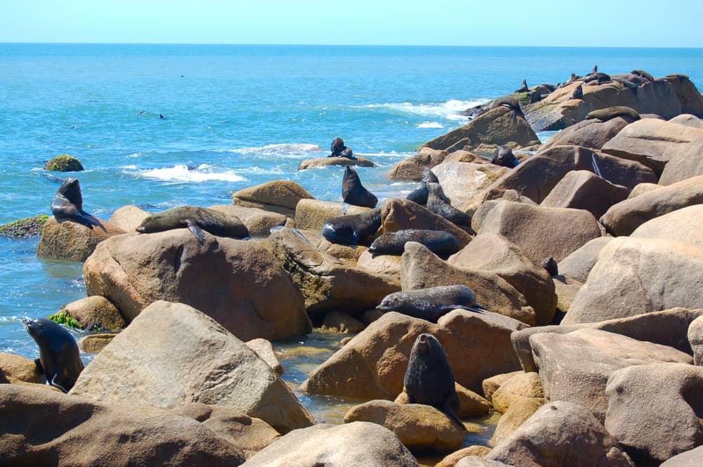 Deniz Aslanları Cabo Polonio Uruguay