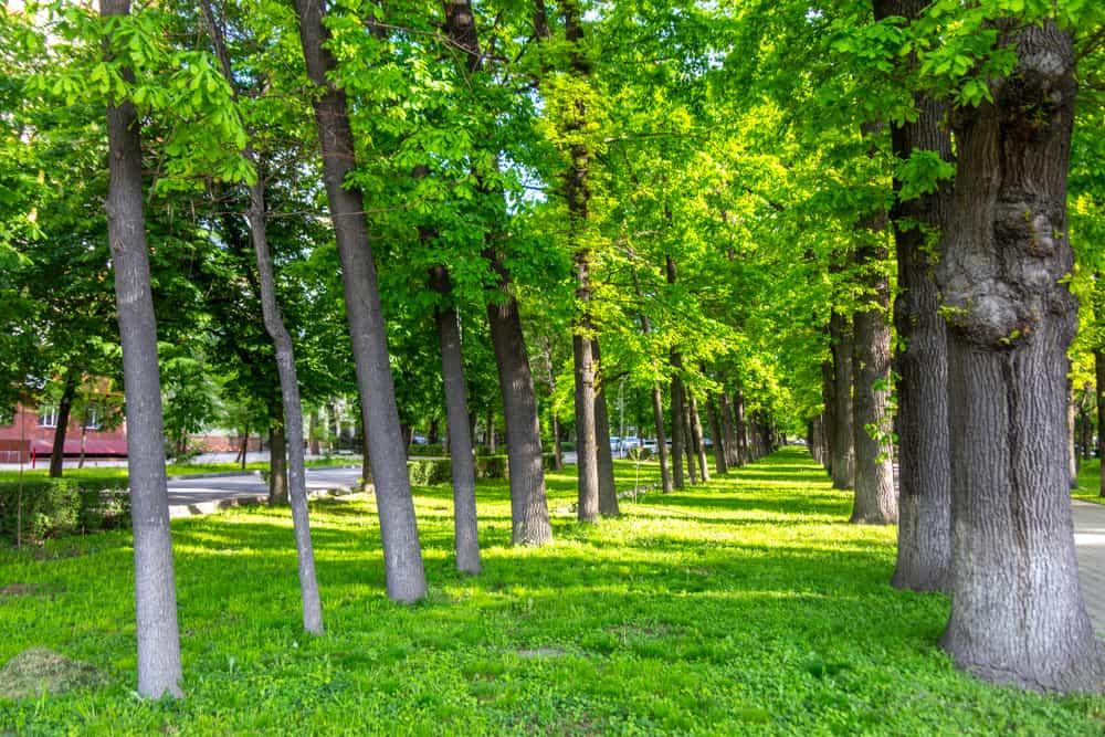 Erkindik Parkı Bişkek