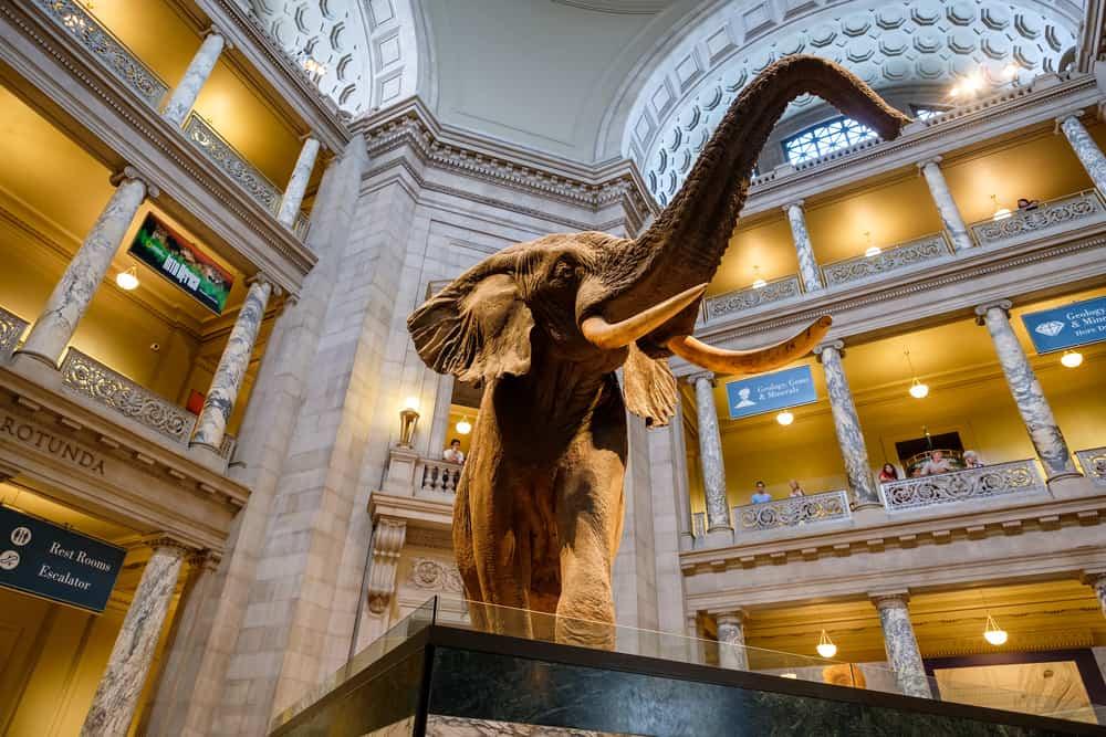 Smithsonian Ulusal Doğa Tarihi Müzesi, Washington