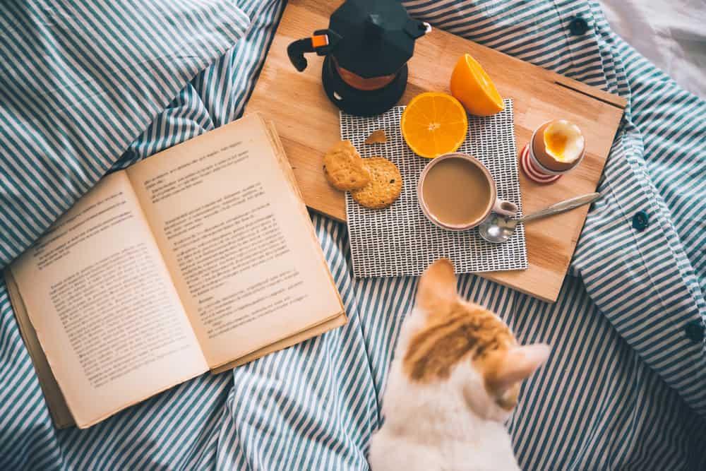 Kitap ve Kahvaltı & Kedi