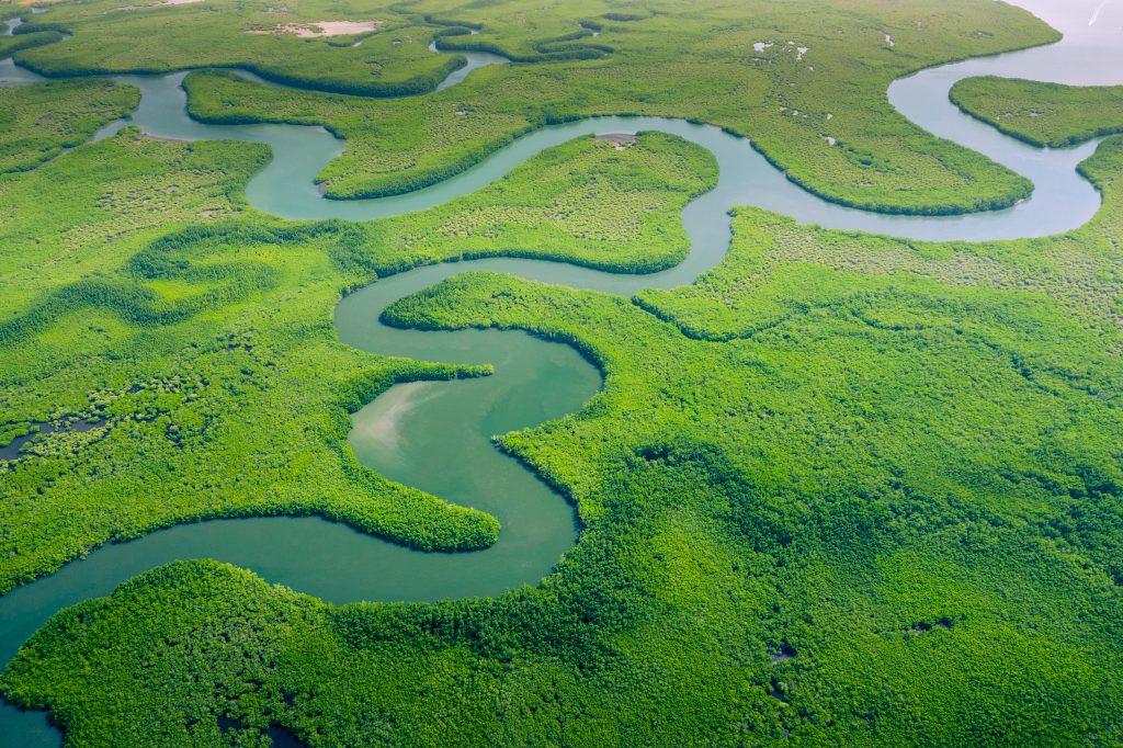 Amazon Ormanları, Güney Amerika