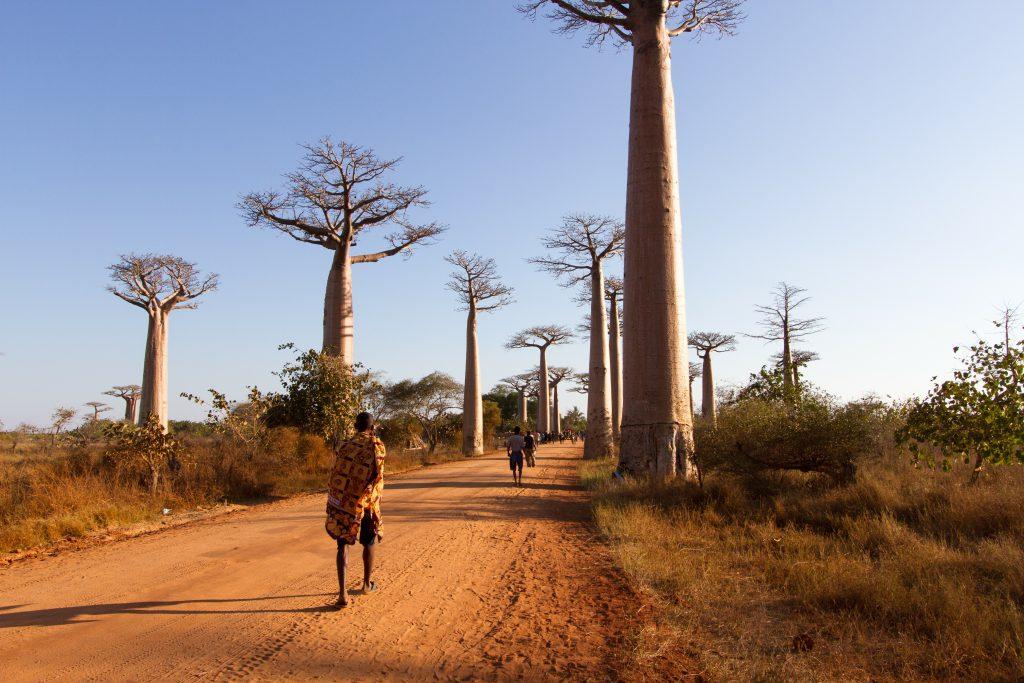 Baobabs Caddesi, Morondava, Madagascar