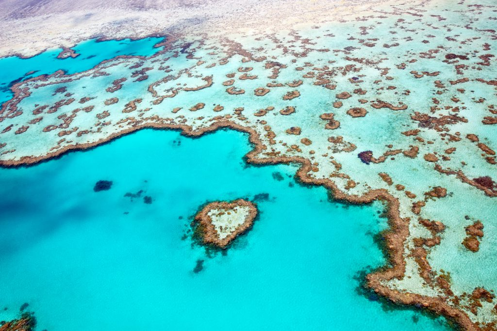 Mercan Resifi