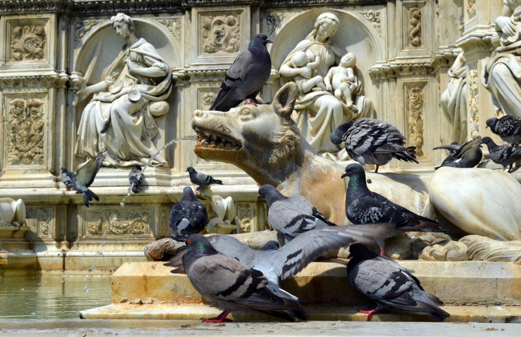 Fonte Gaia (Gaia Havuzu), Siena, İtalya